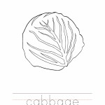 Cabbage Coloring Worksheet