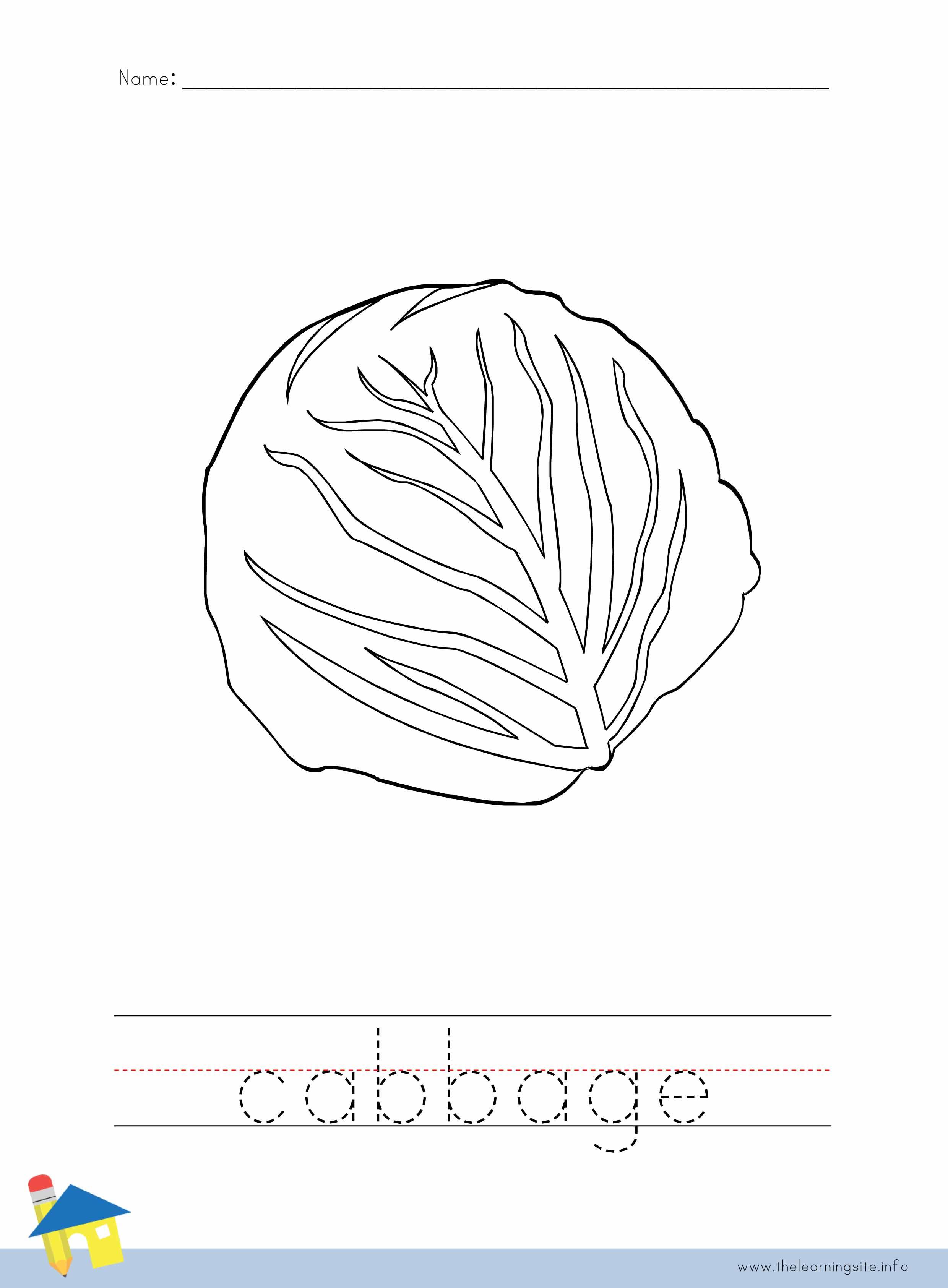 Cabbage Coloring Worksheet