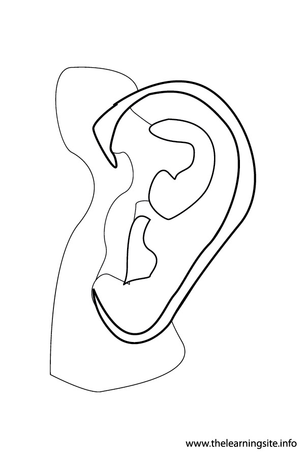 coloring page-body parts-ears-01