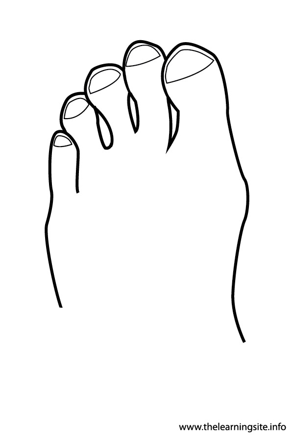 coloring-page-outline-body-parts-toes