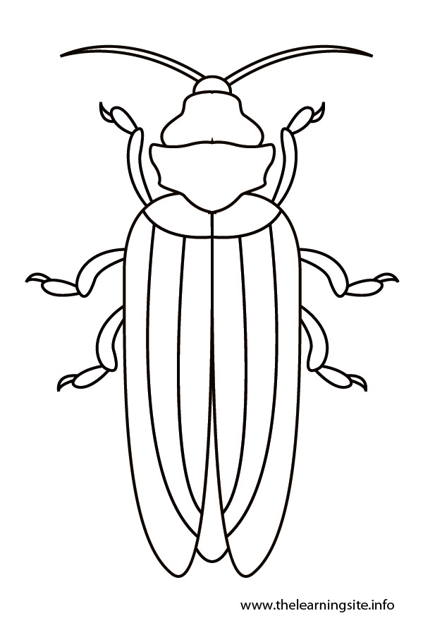 coloring-page-outline-insects-beetle