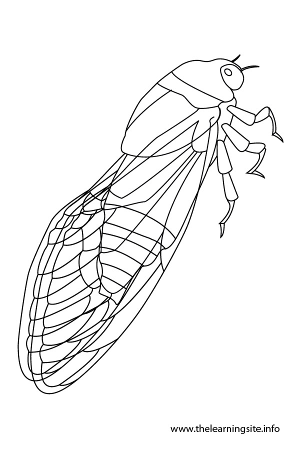 coloring-page-outline-insects-cicada
