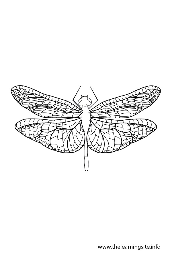 coloring-page-outline-insects-dragonfly