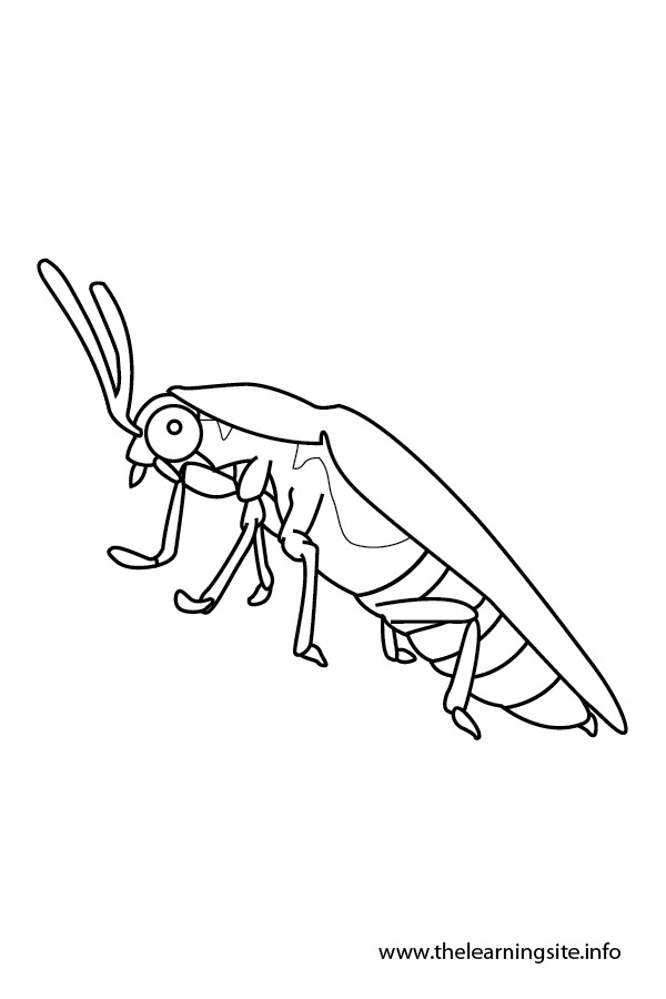 coloring-page-outline-insects-firefly