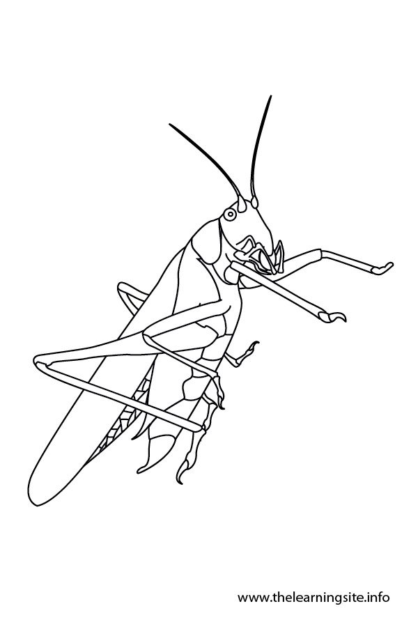 coloring-page-outline-insects-grasshopper