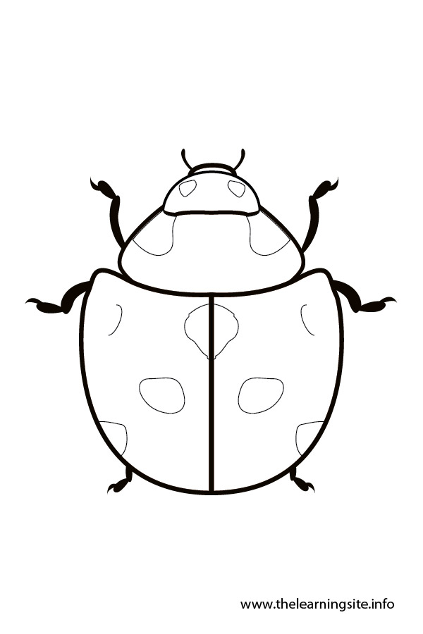 coloring-page-outline-insects-ladybug
