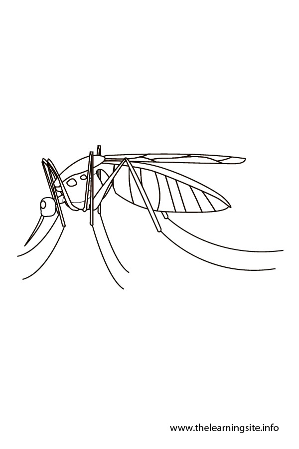 coloring-page-outline-insects-mosquito