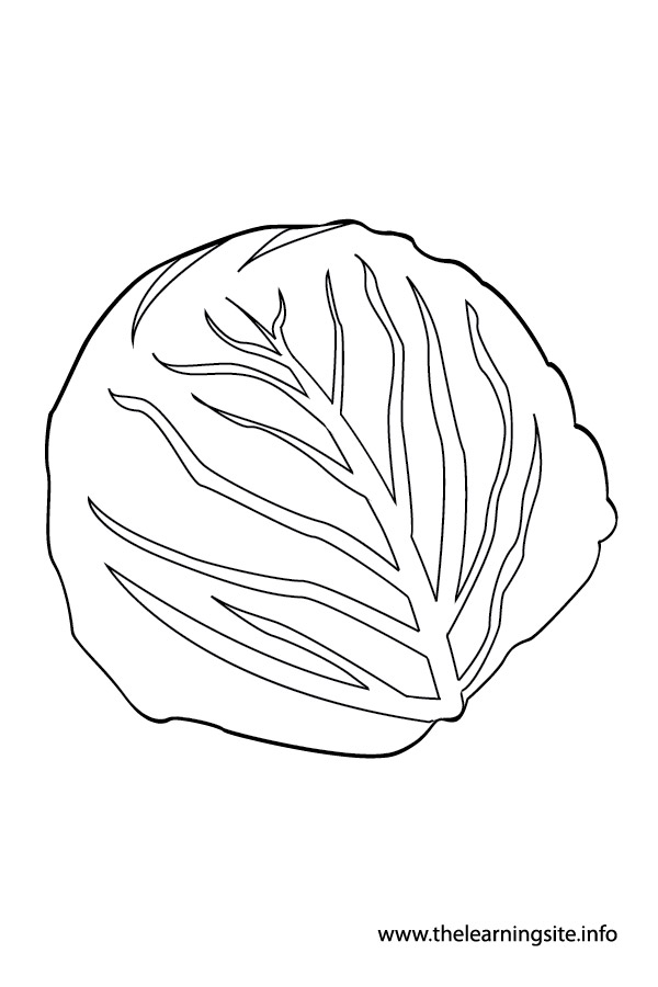 coloring-page-outline-vegetables-cabbage
