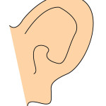 flashcard-body parts-ears2-01