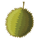 flashcard-durian