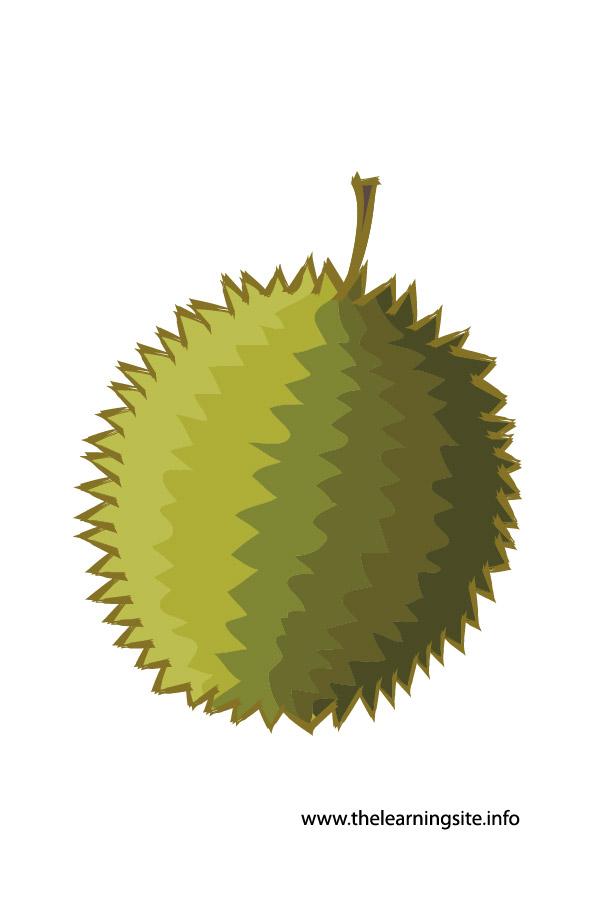 flashcard-durian