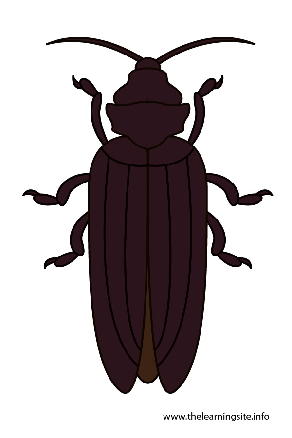flashcard-insects-beetle-01