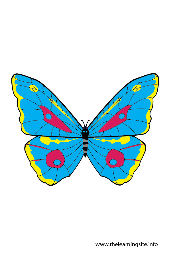 flashcard-insects-butterfly-01