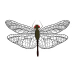 flashcard-insects-dragonfly-01