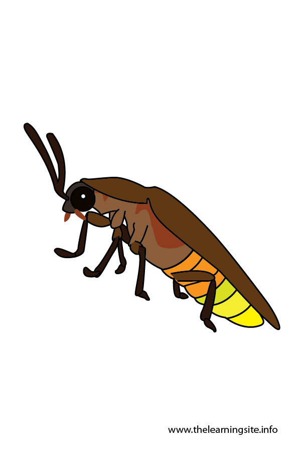 flashcard-insects-firefly-01