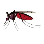 flashcard-insects-mosquito-01