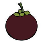flashcard-mangosteen