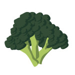 flashcard-vegetables broccoli