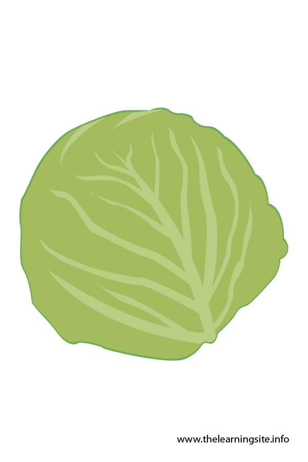 flashcard-vegetables cabbage