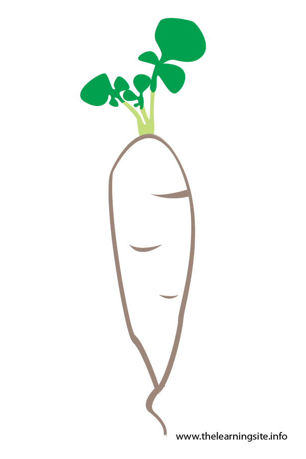 flashcard-vegetables radish