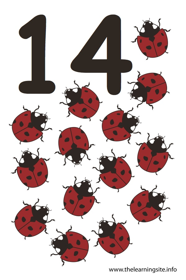 Number Fourteen Flashcard – 14 Ladybugs
