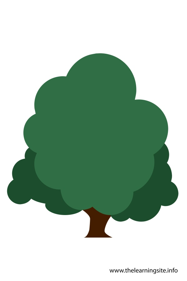flashcard-tree