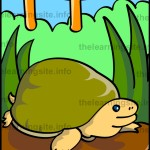 flashcard-alphabet-letter-t-turtle-sample