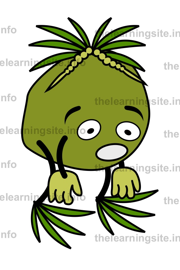 flashcard-fruit-characters-coconut-sample