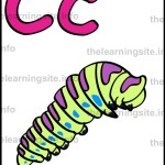 flashcard-alphabet-letter-c-simple-catterpillar-sample