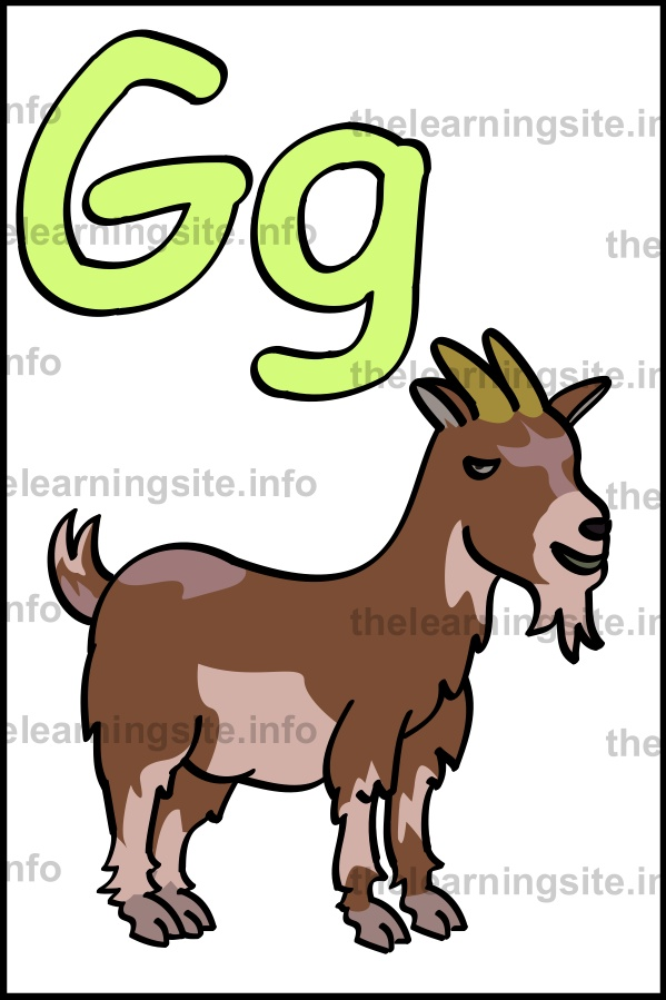 flashcard-alphabet-letter-g-simple-goat-sample
