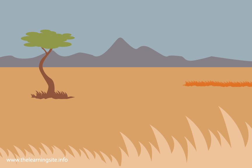 Grassland Savanna Flashcard