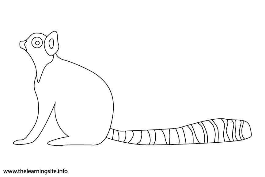 Animal Adjective Striped Ring-tailed Lemur Coloring Page Flashcard Illustration