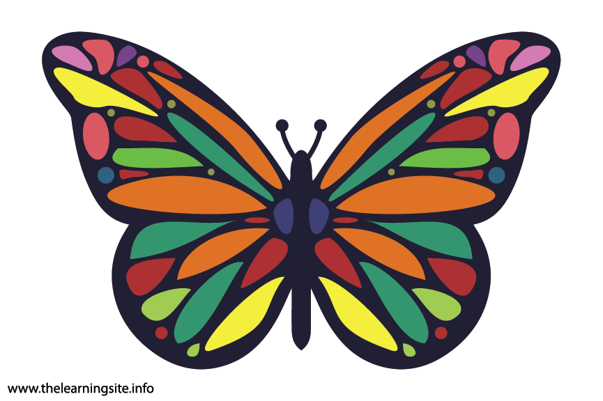 Animal Adjective Colorful Butterfly Flashcard Illustration