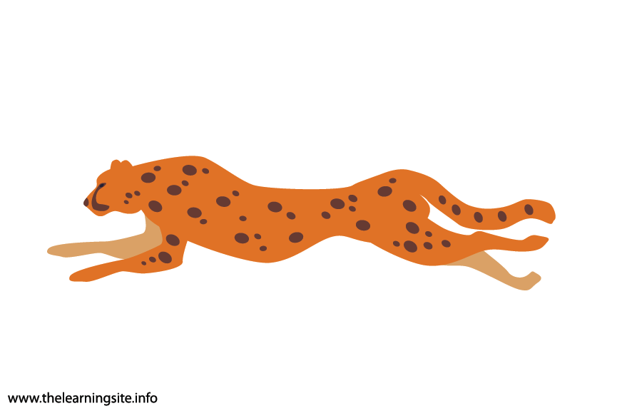 Animal Adjective Fast Cheetah Flashcard Illustration