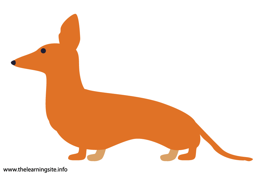 Animal Adjective Short Dachshund Flashcard Illustration