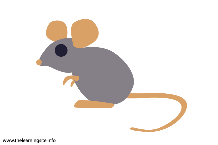 Animal Adjective Small Mouse Flashcard Illustration