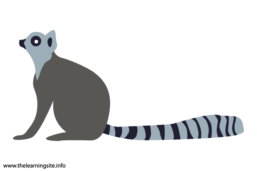 Animal Adjective Striped Ring-tailed Lemur Flashcard Illustration