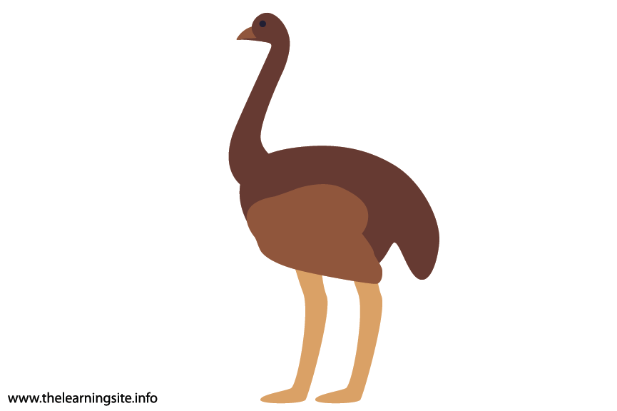 Animal Adjective Tall Ostrich Flashcard Illustration