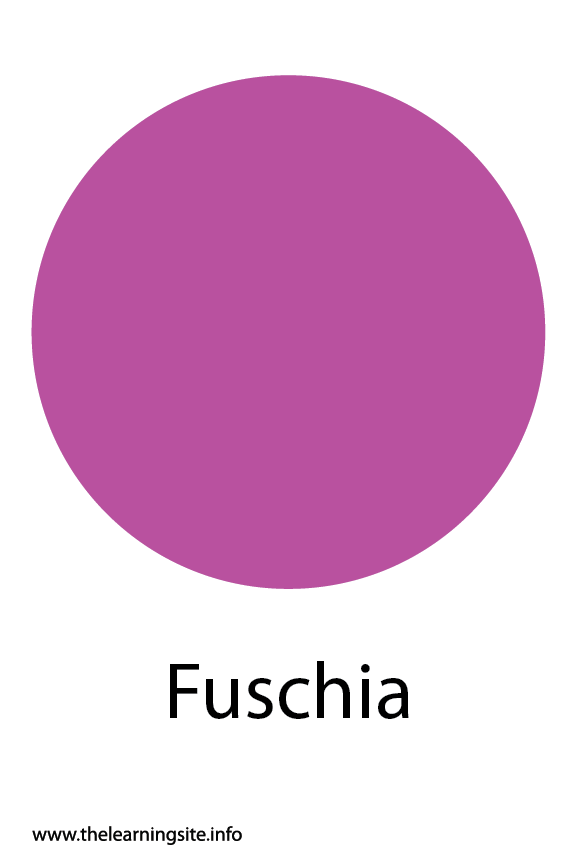 Fuschia Color Flashcard Illustration