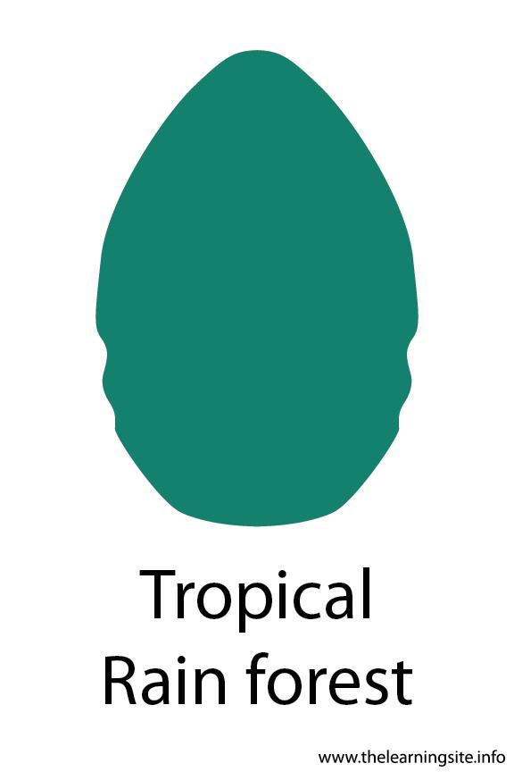 Tropical Rain Forest Crayola Color Flashcard Illustration