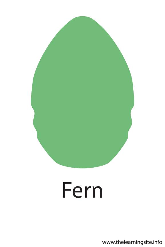 Fern Crayola Color Flashcard Illustration