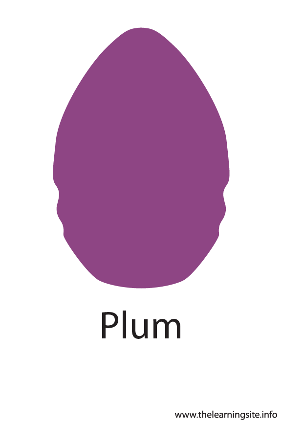 Plum Color Flashcard Illustration